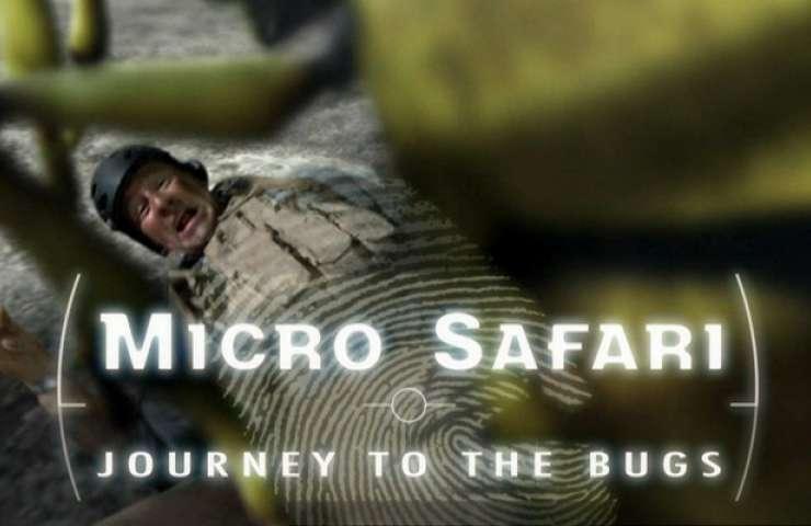 10 micro safari 01