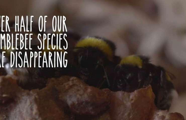 Bee decline 01