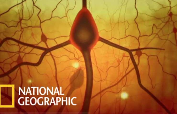 Brain nat geo01